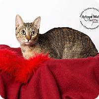 Adopt A Pet :: Thumper - Apache Junction, AZ
