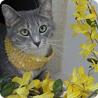Adopt A Pet :: Miss Dee - Chambersburg, PA
