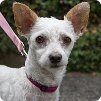 Adopt A Pet :: Paislee - Encino, CA