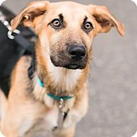 Adopt A Pet :: Heath Fogg - Jersey City, NJ
