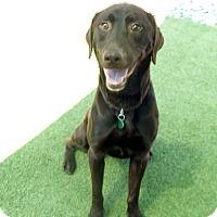 Adopt A Pet :: Luke #3 - Towson, MD
