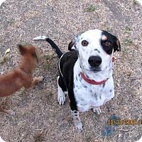 Adopt A Pet :: Marley - Turlock, CA