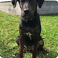 Adopt A Pet :: Jada - Gainesville, FL