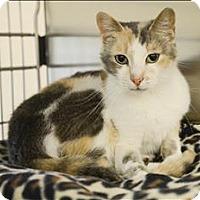 Adopt A Pet :: Gilli - Sherwood, OR