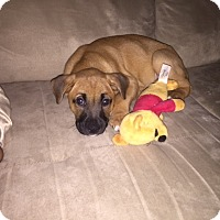 Adopt A Pet :: Pinky - Regina, SK