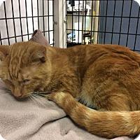 Adopt A Pet :: Jazz - Janesville, WI
