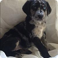 Adopt A Pet :: Reagan (ETAA) - Hagerstown, MD