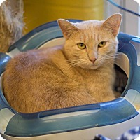 Adopt A Pet :: Buffy - Pittsburg, KS