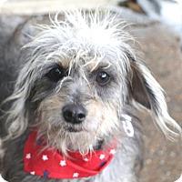 Adopt A Pet :: Felicity - Allentown, PA
