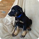 Adopt A Pet :: Abby-pending adoption