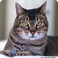 Adopt A Pet :: Leontyne - Davis, CA