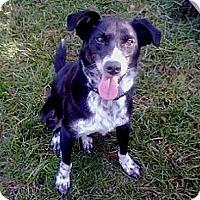 Adopt A Pet :: Donnie - Hamilton, ON