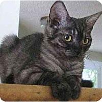 Adopt A Pet :: Zaboo - Davis, CA