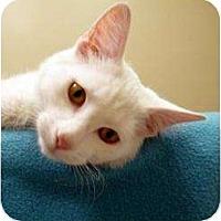Adopt A Pet :: Edgar - Chicago, IL
