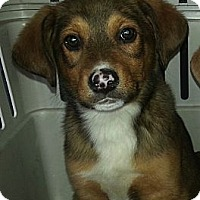 Adopt A Pet :: Seth(PENDNG!) - Chicago, IL