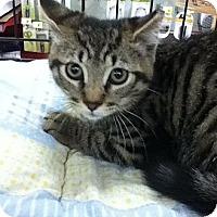 Adopt A Pet :: Rocco - Riverside, RI