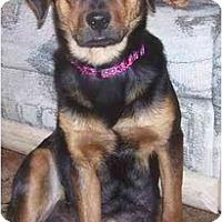 Adopt A Pet :: Delilah - Chandler, IN