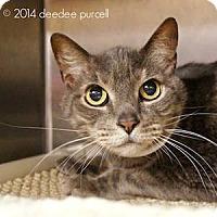 Adopt A Pet :: Judge Mycroft - Gilbert, AZ