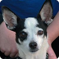 Adopt A Pet :: Coco - Palmdale, CA