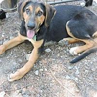 Adopt A Pet :: Ava  ADOPTION PENDING - East Hartford, CT