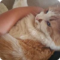 Adopt A Pet :: Pumpkin - East McKeesport, PA