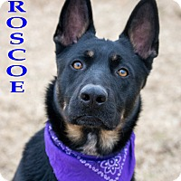 Adopt A Pet :: Roscoe - Patterson, CA