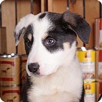 Adopt A Pet :: Trisha - Sudbury, MA