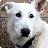 Adopt A Pet :: Aiden - Phoenix, AZ