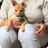 Adopt A Pet :: FAWN - Pewaukee, WI
