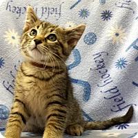 Adopt A Pet :: Ami - Addison, IL
