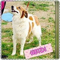 Adopt A Pet :: Heidi - Flemington, NJ