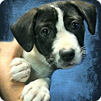Adopt A Pet :: Morgan - Lufkin, TX