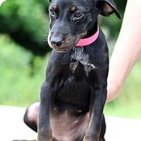 Adopt A Pet :: Nikita - Waldorf, MD