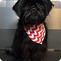 Adopt A Pet :: Otis - McKinney, TX