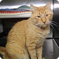 Adopt A Pet :: Davey Jones - Middletown, CT