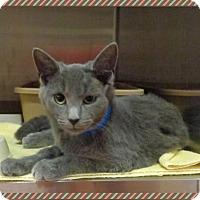 Adopt A Pet :: LEOPOLD - Marietta, GA