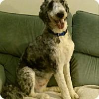 Adopt A Pet :: RUKAS - Melbourne, FL