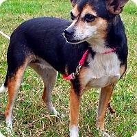 Adopt A Pet :: Daisy - N - Huntington, NY