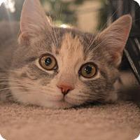 Adopt A Pet :: HazelSue - Carlisle, PA