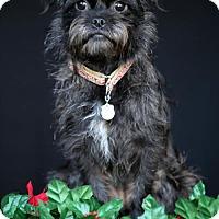 Adopt A Pet :: Wilhelmina  'Mina' - SAN PEDRO, CA