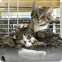 Adopt A Pet :: Squeaky - Marlinton, WV