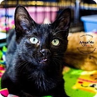Adopt A Pet :: A..  Dustin - Mooresville, NC