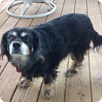 Adopt A Pet :: Karen -Courtesy List - Richmond, VA