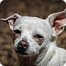 Adopt A Pet :: Anneliese