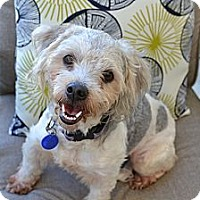 Adopt A Pet :: Pepper - Los Angeles, CA