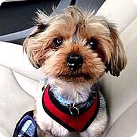 Adopt A Pet :: Doug - Miami, FL