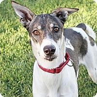 Adopt A Pet :: Echo - Santa Rosa, CA