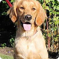 Adopt A Pet :: LUCY~ADOPTED! - North Vancouver, BC