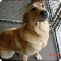 Adopt A Pet :: Spanky - Cumming, GA