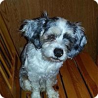 Adopt A Pet :: Trixie - Seymour, CT